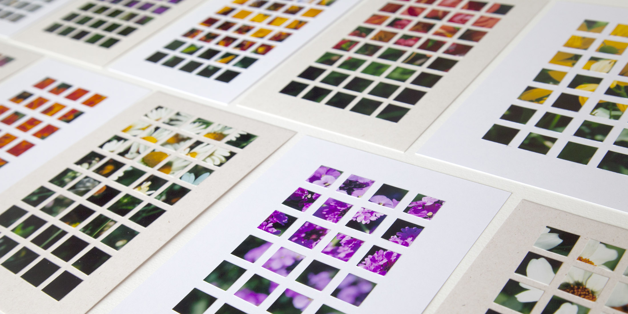 Flower Botanical photo grid by Irish artist Doreen Kennedy
